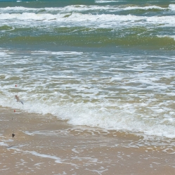 Texas beaches are open...